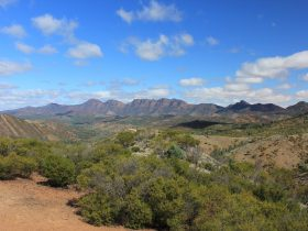 Ikara-Flinders Ranges National Park