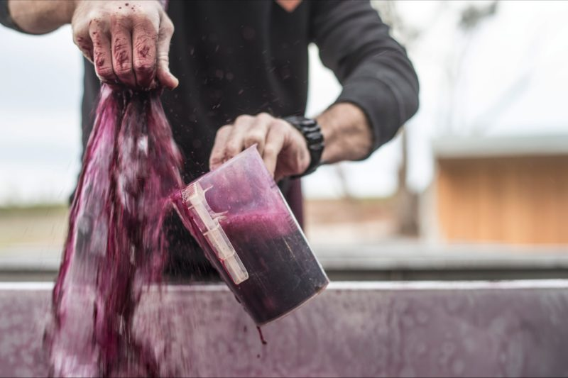 Izway Wines winemaker midst pump over and sample collection