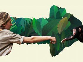 Jane Goodall: Rewind the Future. Jane Goodall reaching tiny cimpanzee.