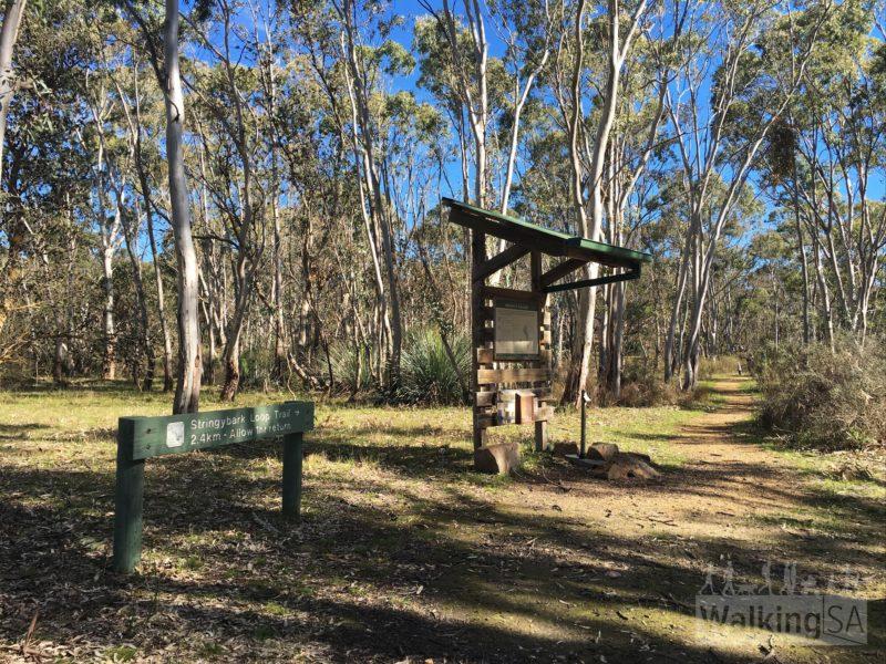 Stringybark loop trail
