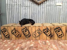 The Brew Dog hard at work