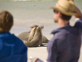 Seal Bay Tours
