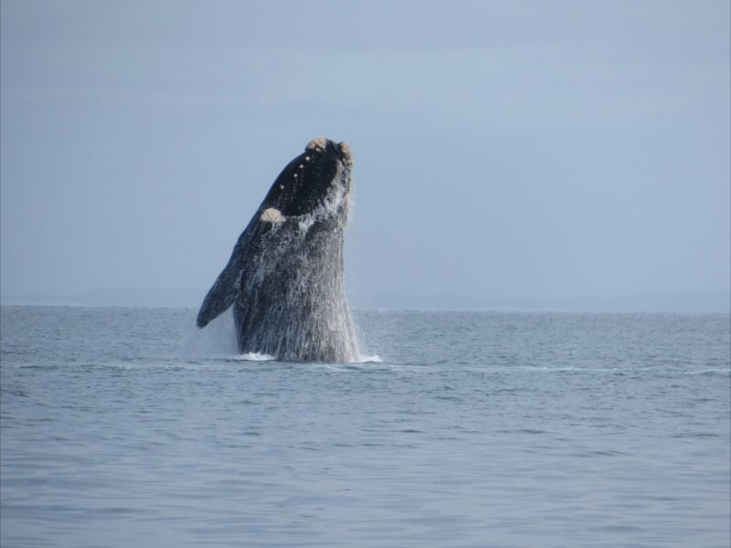 Kangaroo Island Ocean Safari Whale