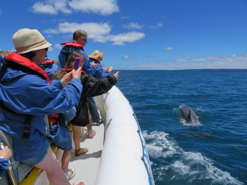 Dolphin Safari with Kangaroo Island Ocean Safari