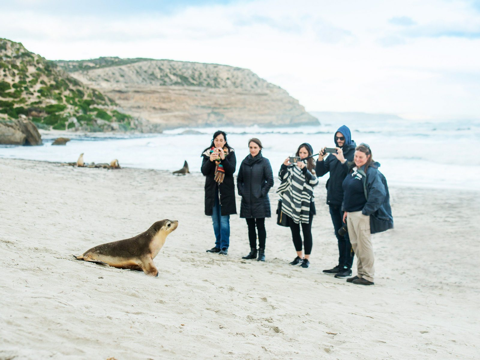 Seal Bay Conservation Park