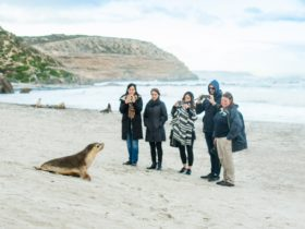 Guided beach tour at Seal Bay Conservation Park