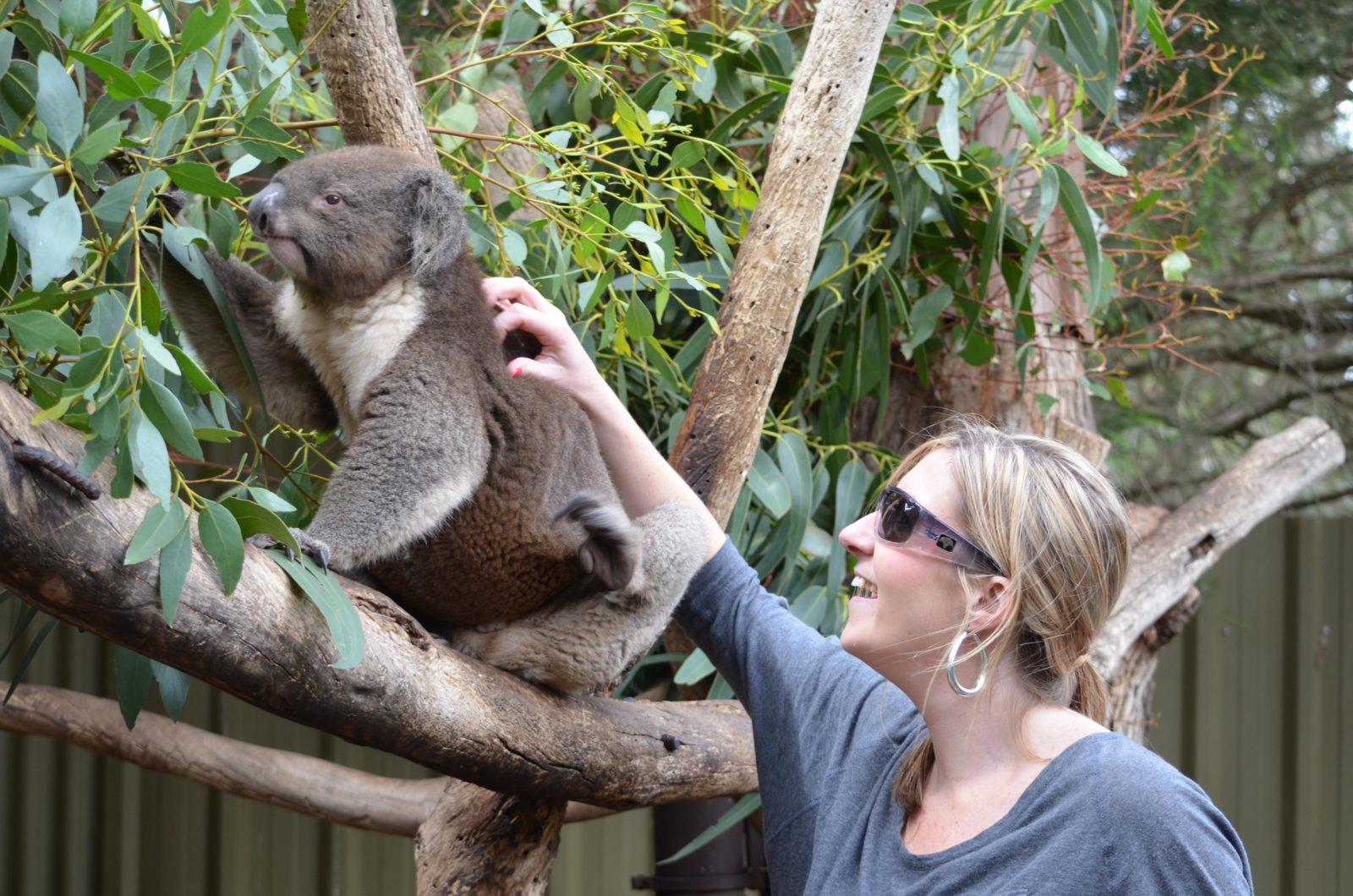 Kangaroo Island Wildlife Park, Seddon, Kangaroo Island, South Australia