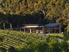 The cellar door, nestled between Shiraz vines and eucalypt forest