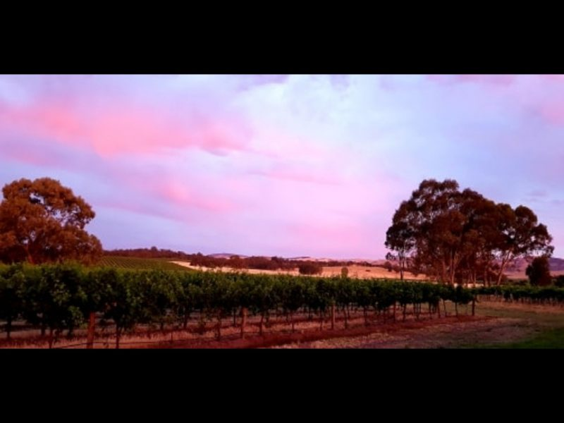 Beautiful view of our vineyard