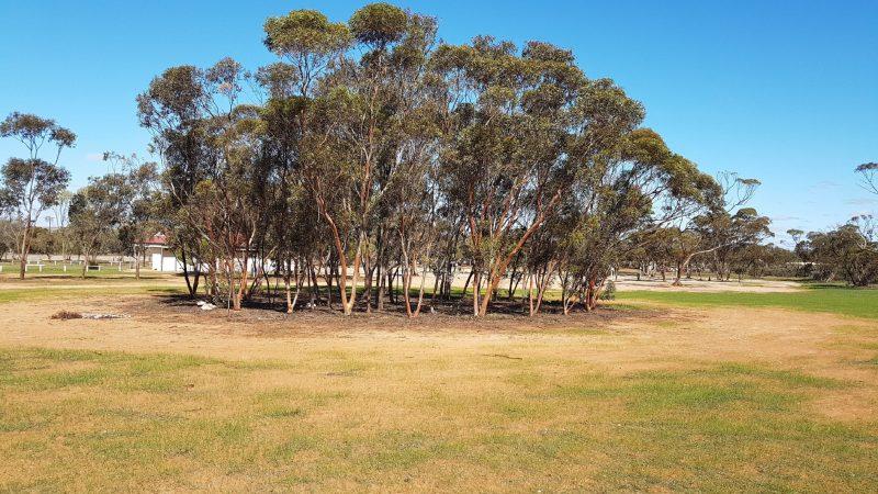 KIMBA CARAVAN PARK TREE CIRCLE