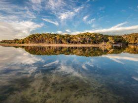 Lashmar Conservation Park