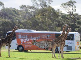 LinkSA - Monarto Safari Park Bus 1