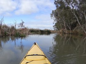 Lower Murray Canoe Trail