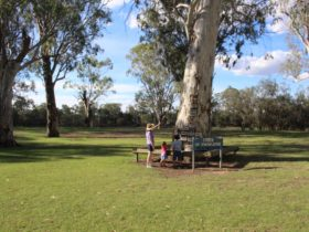 Loxton's Tree of Knowledge