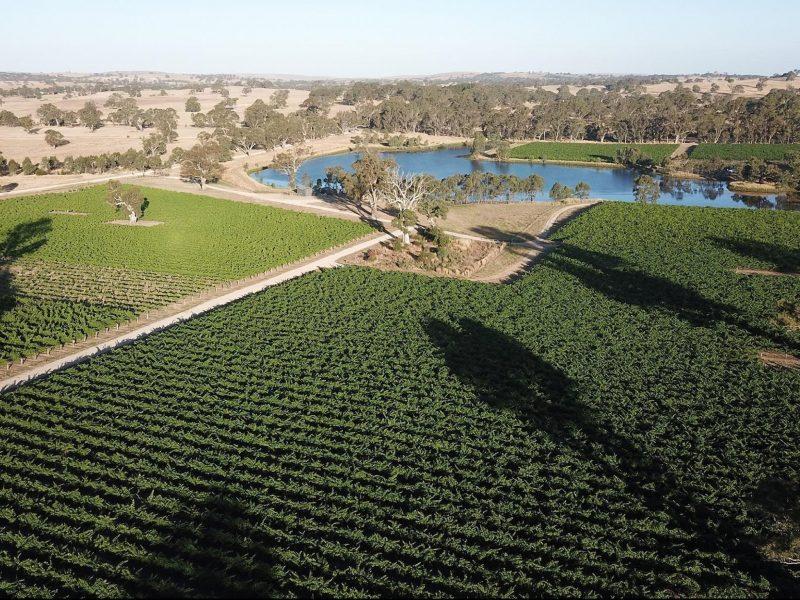 Luxury Eden Valley Vineyard & Wine Tasting Tour