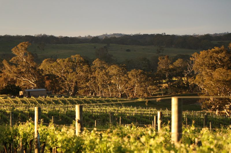 Vines and Views from Boongarrie Estate