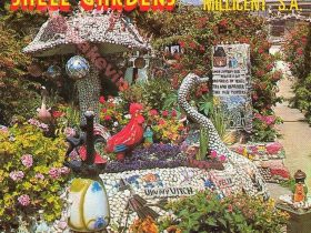 Millicent Remembers Shell Garden