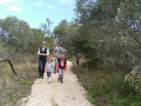 Meningie Lions Walking Trail