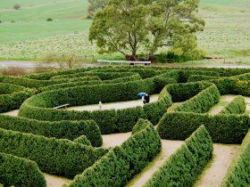 Strolling Mintaro Maze