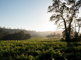 Mitchell Wines Property