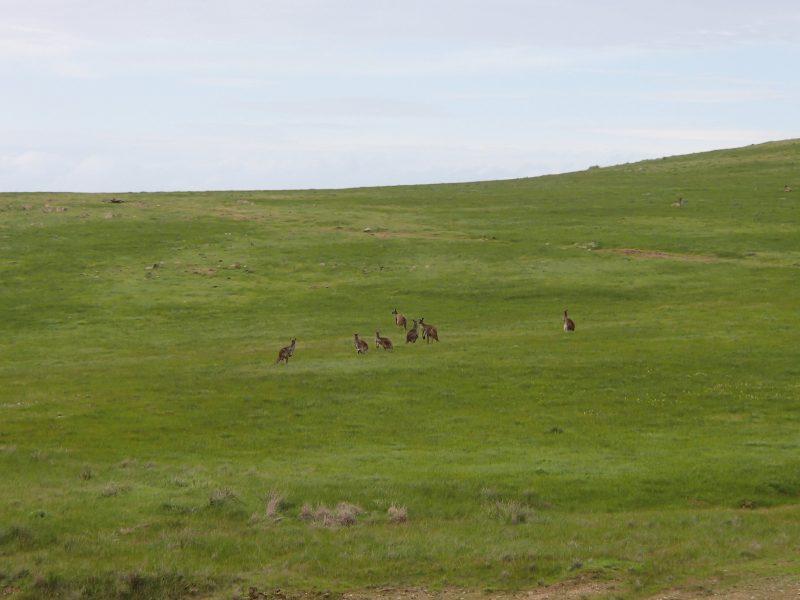 Mokota Conservation Park