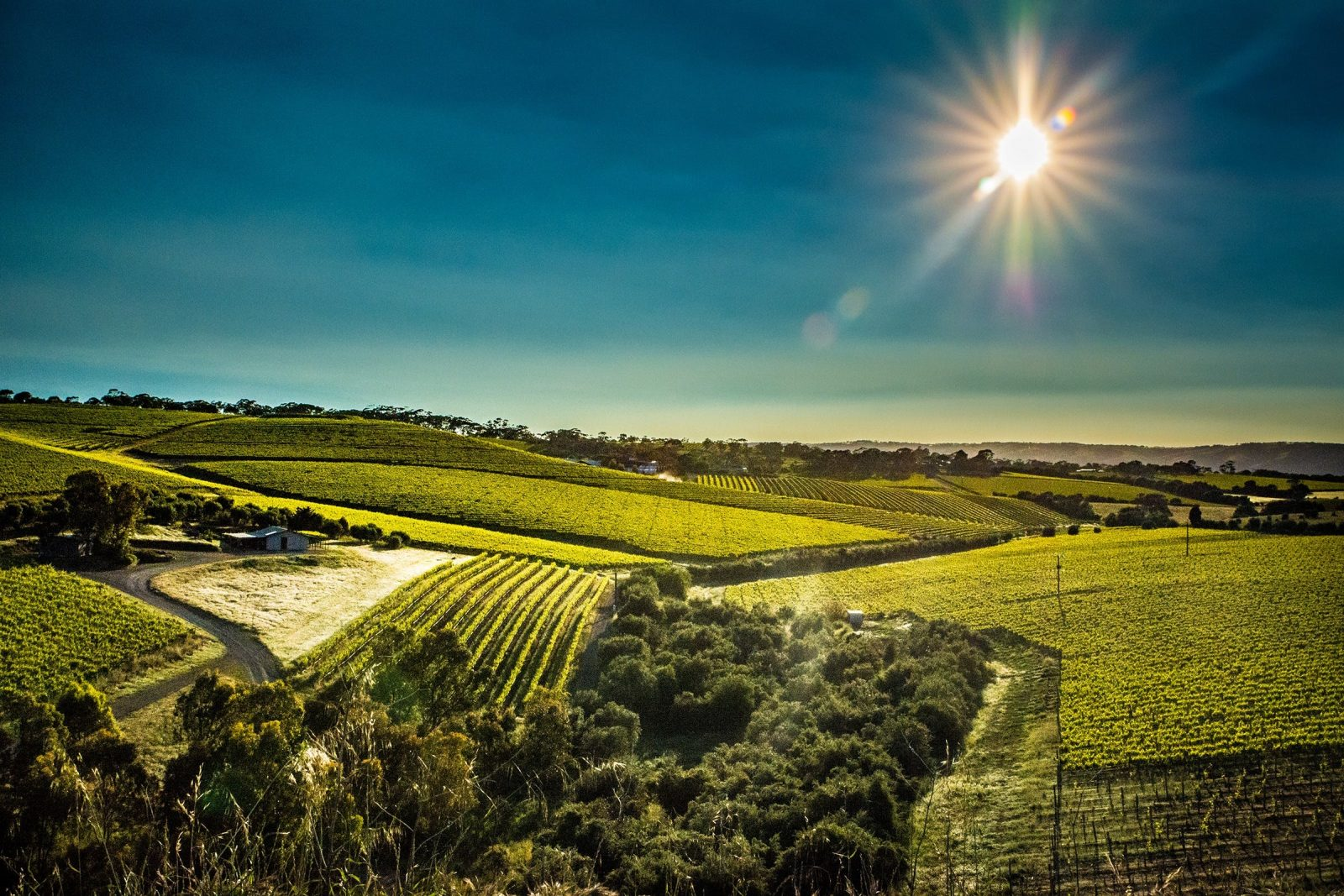 Vineyard views at Mollydooker Wines