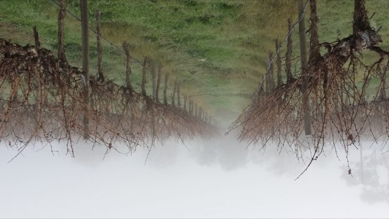 Coonawarra in winter, foggy and cold