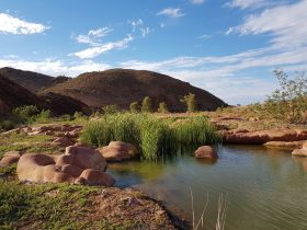 A permanent waterhole with an abundance of bird life and wildlife, you never know what you will find