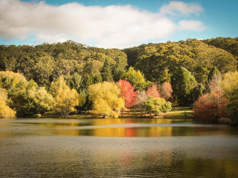Mount Lofty Botanic Garden in autumn is one of the Adelaide Hills' most iconic sights.