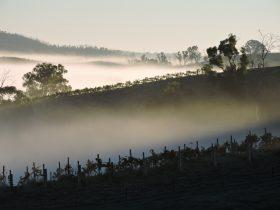 Mt Bera Vineyards