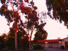 Central Olympic Motel - evening light