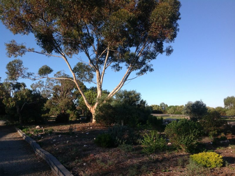 Murray Bridge Motor Inn, Murray Bridge, Murray River Lakes and Coorong, South Australia