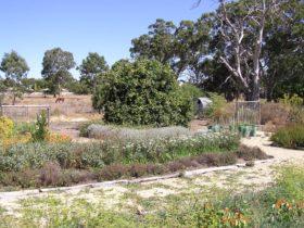 Herb Garden Petticoat Lane