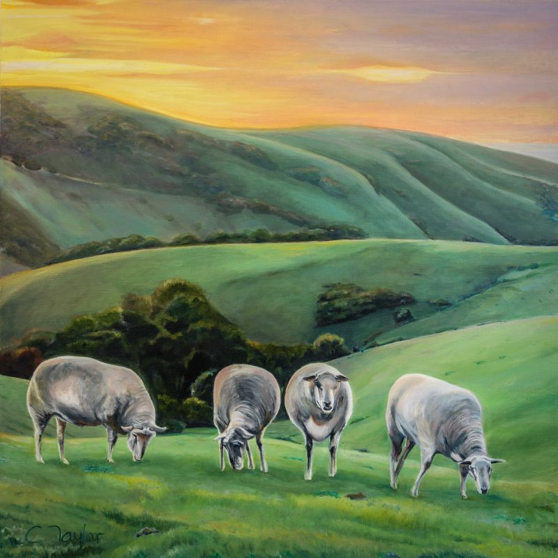 Caroline Taylor, naughty sheep, Authentic Kangaroo Island