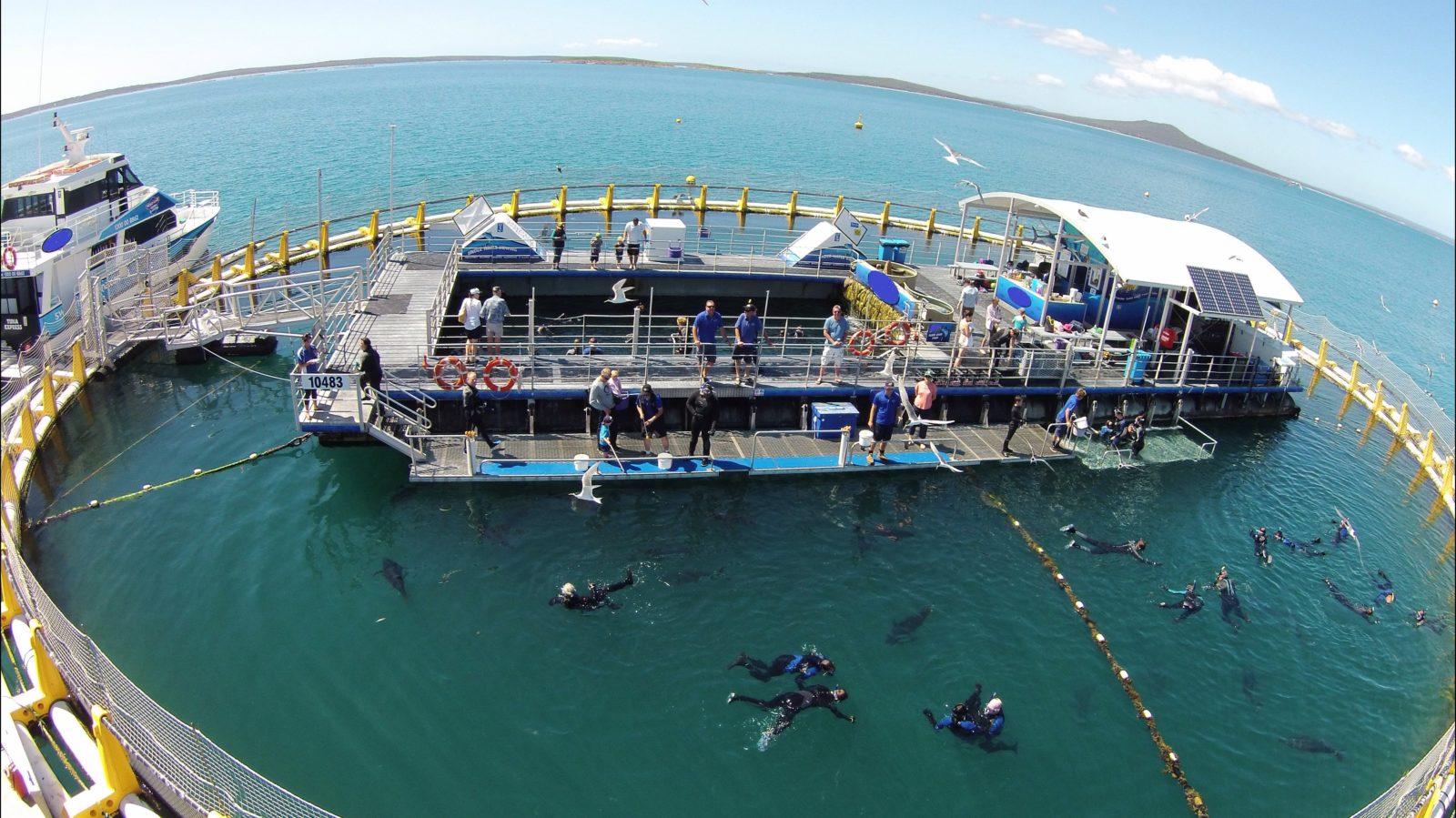 Happy days on Swim With the Tuna pontoon!