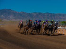 Family Race Day Sunday 28th August