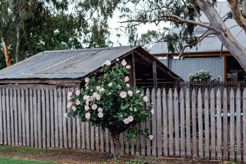 Home of The Black Chook