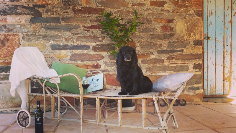 Relax on the vintage cane sun lounge with a good book and an excellent glass of good Barossa wine