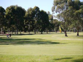 Penola Golf