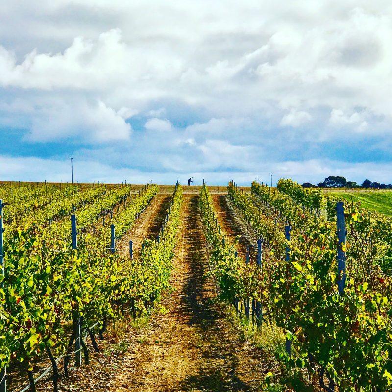 Port Lincoln Vineyard