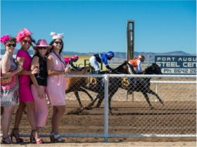 Pink Ladies Race Day Sunday 9th April 2017