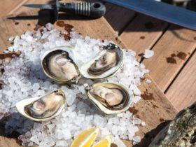 Pure Coffin Bay Oysters Farm Tours