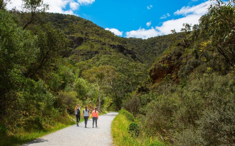 Best place in Adelaide to see Koala's in the wild, natural landscapes, wildlife, seasonal waterfalls
