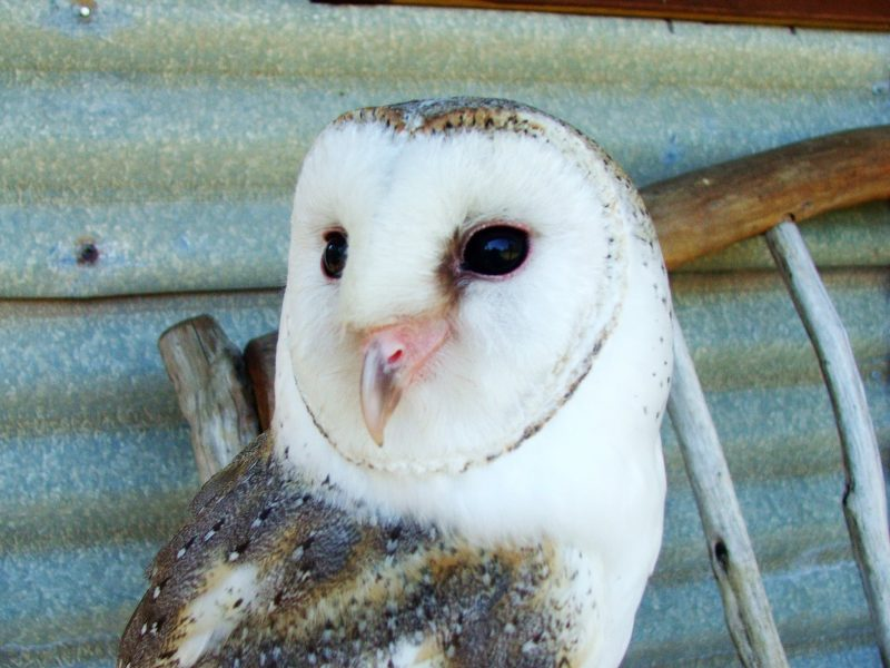 Casper our friendly Barn owl hops on your lap if your in the front row and is a favorite.