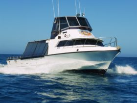 SA Fishing Charters, Marion Bay Fishing Charters, Yorke Peninsula Fishing Charters