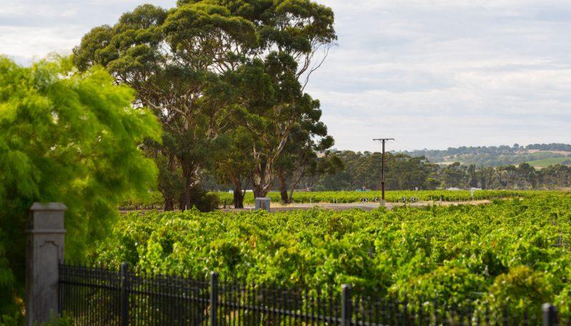 Rosenvale Vineyards