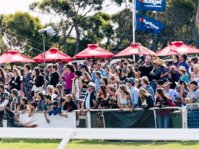 The crowd enjoying the festivities