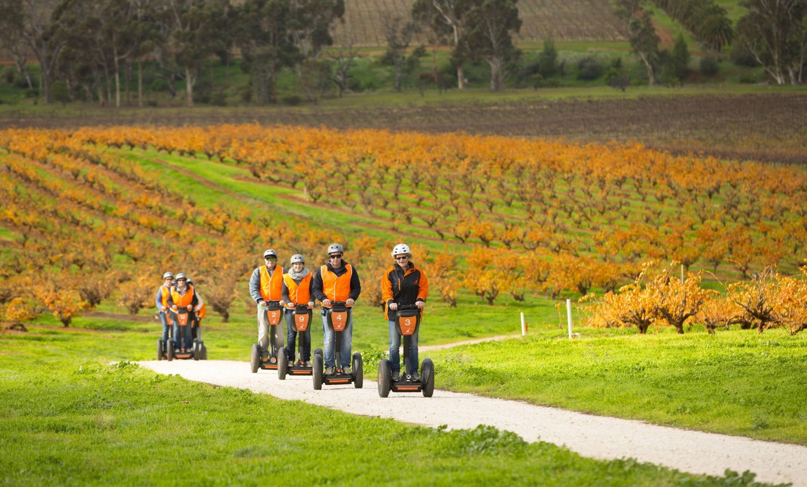 On the way to the 100yr old bush vines.