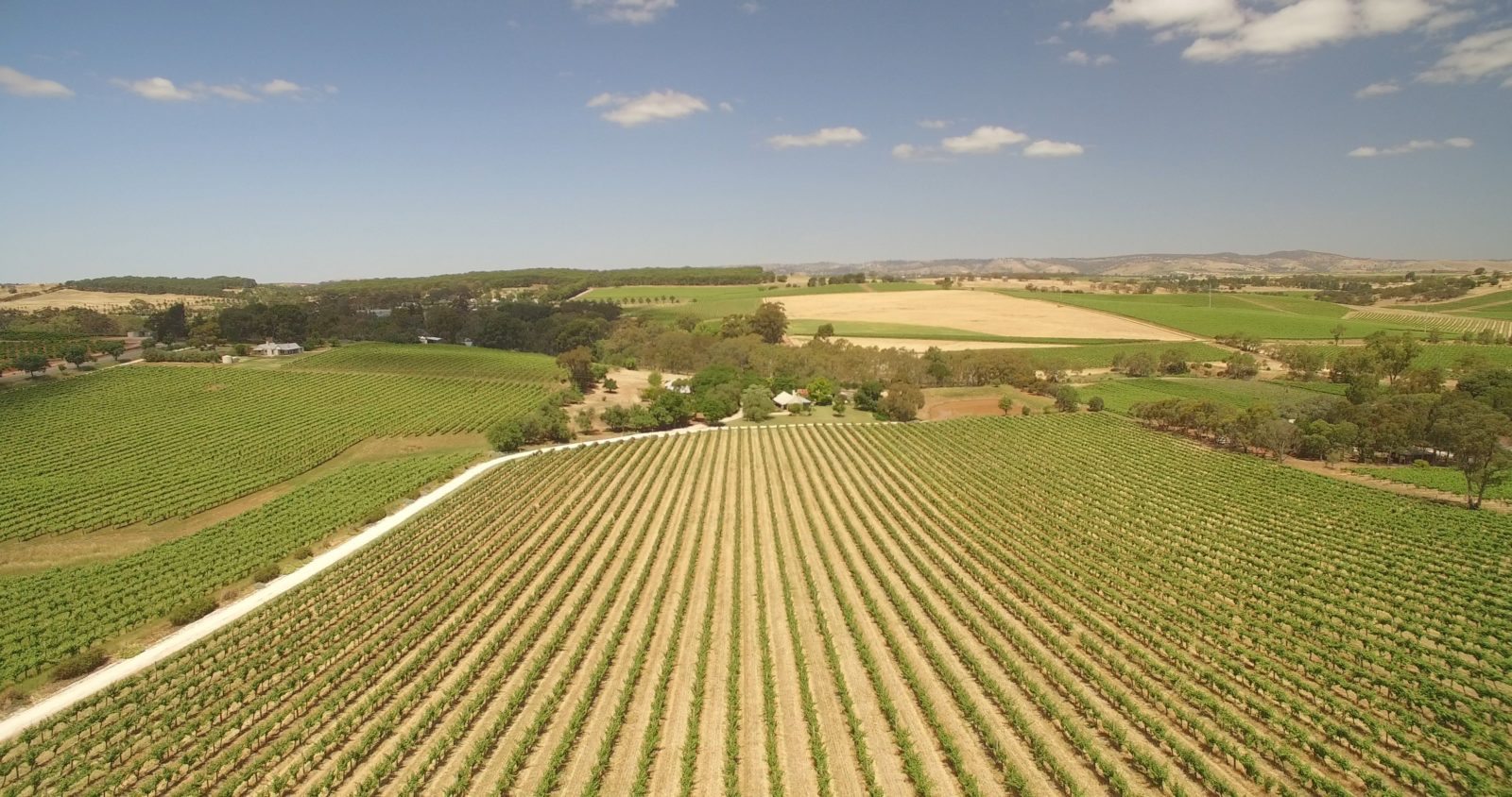 Seize the Day Wines vineyard Seppeltsfield Barossa Valley