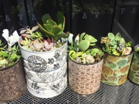 Home grown Succulents